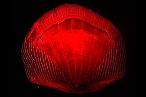 Topic 1_RTP_Zebrafish lab_300x200